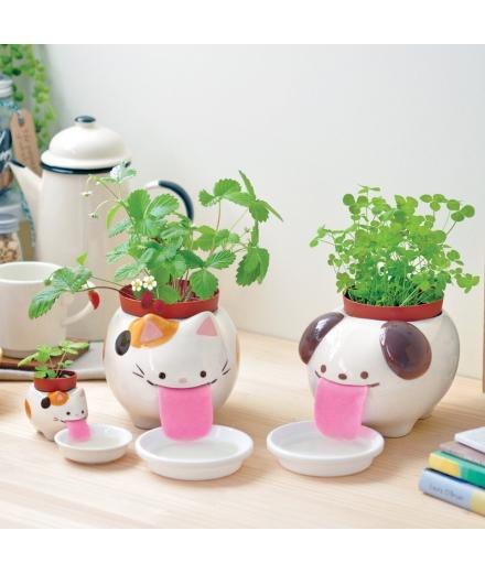 Plantes à faire pousser Peropon Papa Chat - SEISHIN
