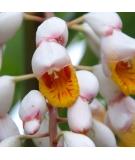 Lotion Naturelle BIO ECOCERT Hydratante et Régénérante - RUHAKU