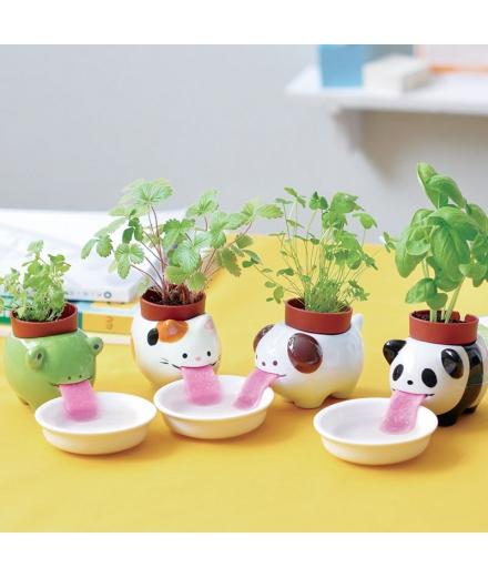 Plantes à faire pousser Peropon Chien - SEISHIN