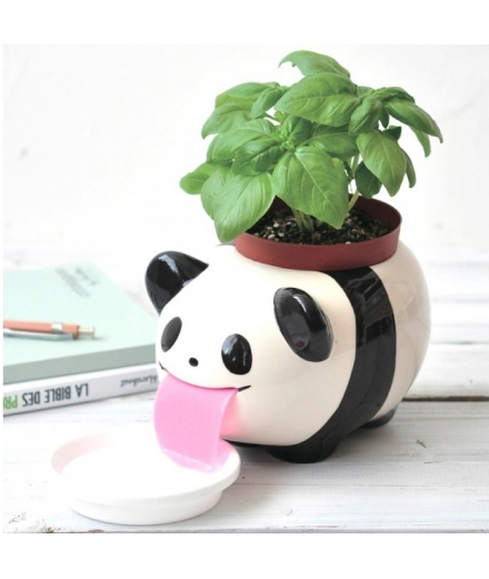 Plantes à faire pousser Peropon Papa Panda - SEISHIN