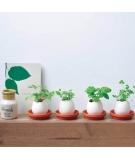 Plante à Cultiver Eggling Cactus - SEISHIN