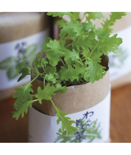 Plantes à Cultiver Et Manger Basilic Citroné Cultivate & Eat- SEISHIN