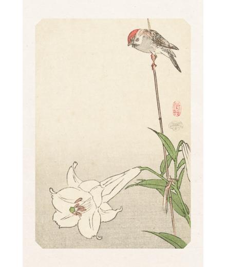 Carte Postale Oiseau & Fleur De Lys 10x15cm - Editions Jourdenuit
