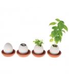 Plante à Cultiver Eggling Fraises Sauvages - SEISHIN