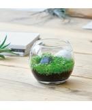 Jardin Zen Miniature À Faire Pousser - NOTED