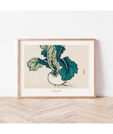 Affiche Estampe Radis / Atelier Bigarade
